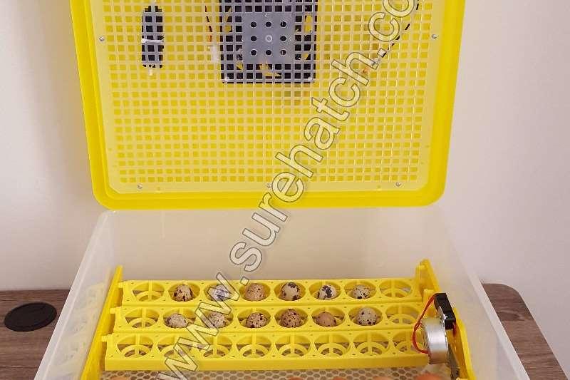 Surehatch MiniHatch 48 Egg 12V and 220V Incubator Egg incubator