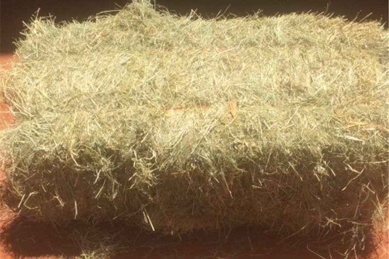Hay and Forage Balers Goeie gehalte Teff bale te koop