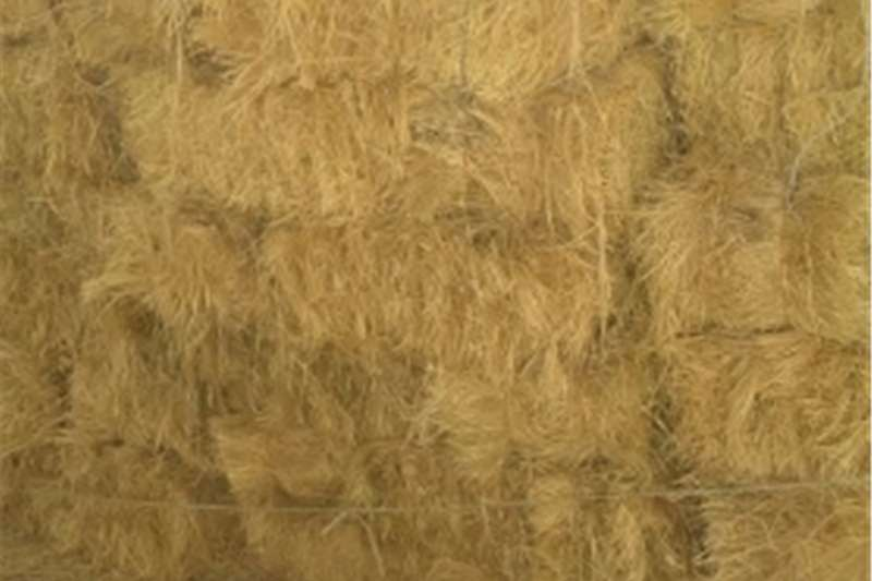 Balers Teff bale te koop Hay and forage