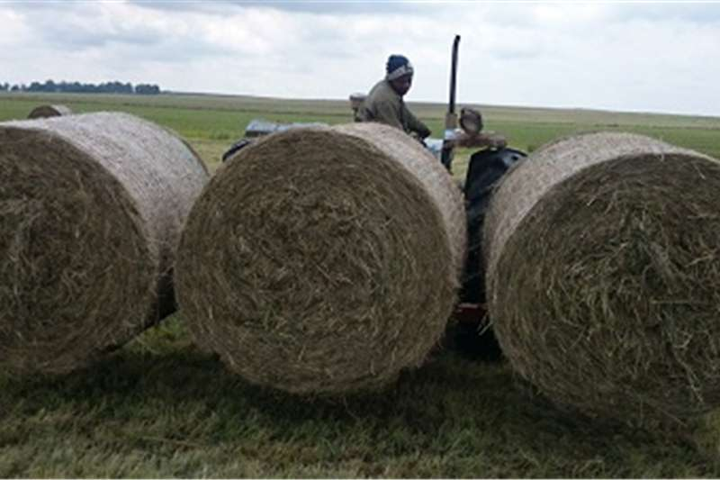 Other hay and forage 3 Baalvurk   Myburgh Toerusting Hay and forage