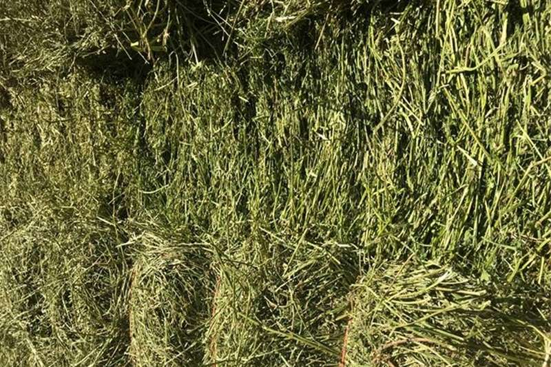 Other hay and forage DenQ Agri   Lusern for sale Hay and forage