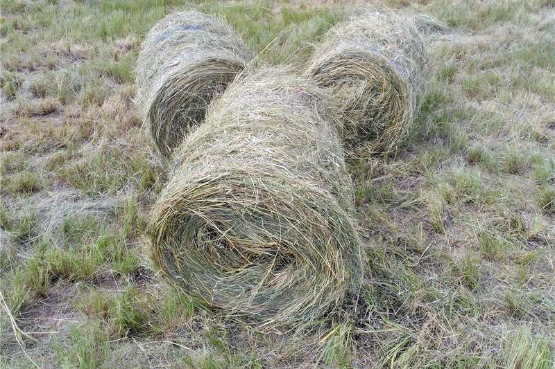 Hay and Forage Other Hay and Forage Eragrostis grass bales