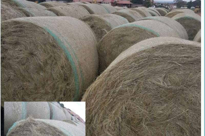 Hay and Forage Other Hay and Forage Eragrostis