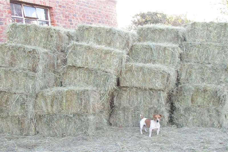 Other hay and forage Eragrostis/oulands blok bale Hay and forage