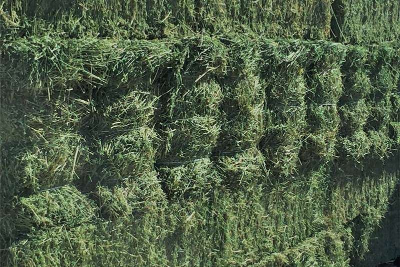 Other hay and forage First Grade Lucerne Hay Bales 25kg Hay and forage