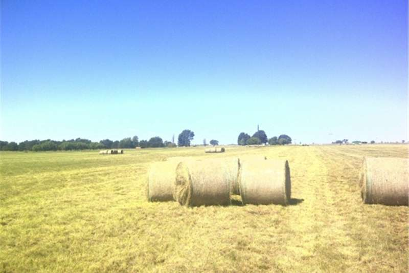 Hay and Forage Other Hay and Forage Groen Oulandsgras