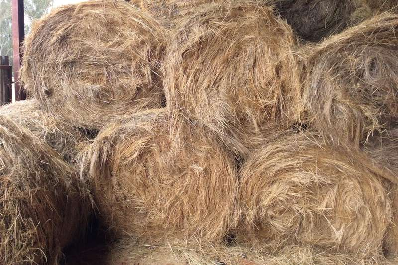 Hay and Forage Other Hay and Forage Groot ronde bale teff