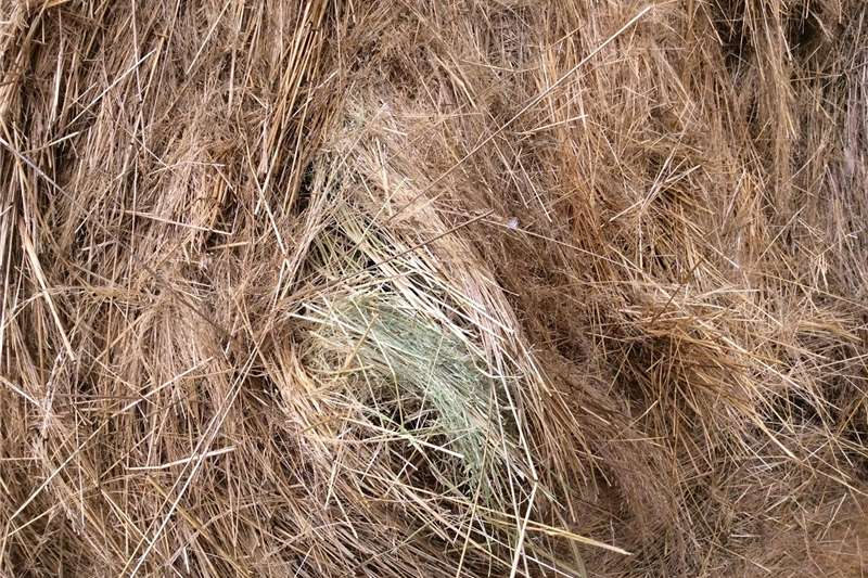 Other hay and forage Groot ronde bale teff Hay and forage