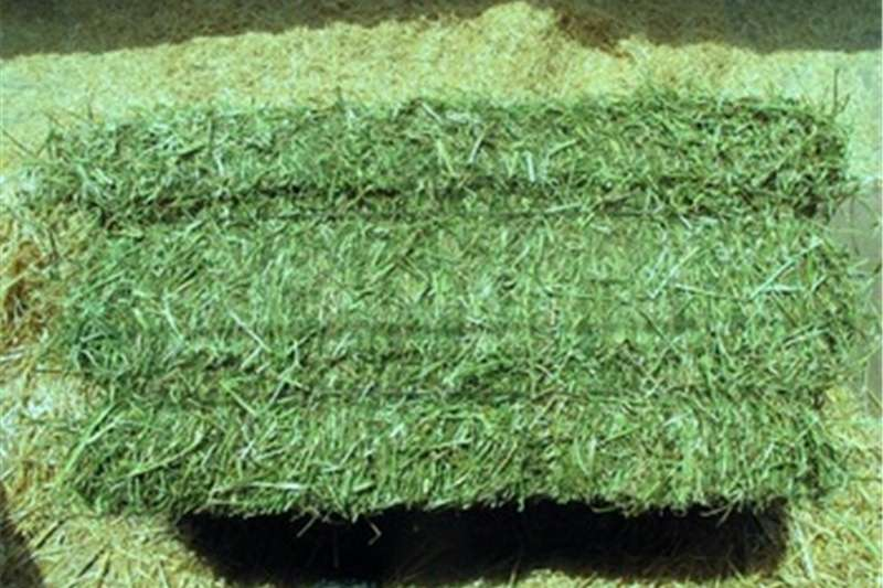 Other hay and forage Lucern Hay Bales A grade & Poultry Feeds Hay and forage