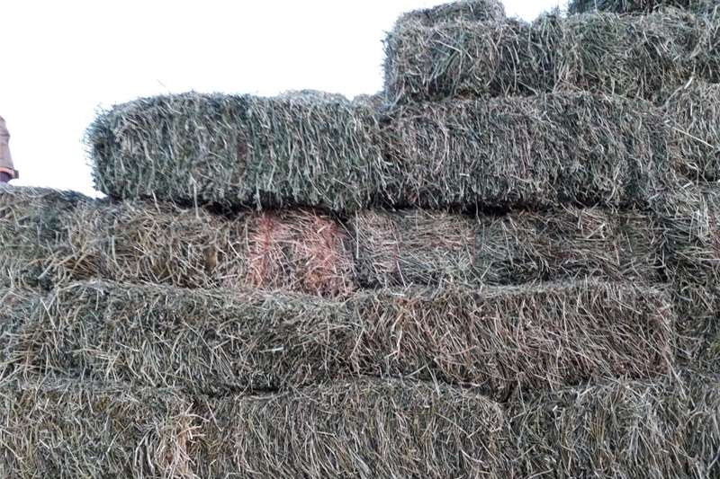 Other hay and forage Lucerne A Grade Hay and forage
