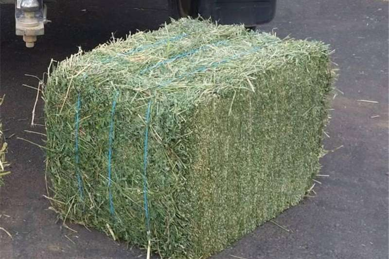 Hay and Forage Other Hay and Forage Lucerne Bales Teff & Eragrostis Hay Bales