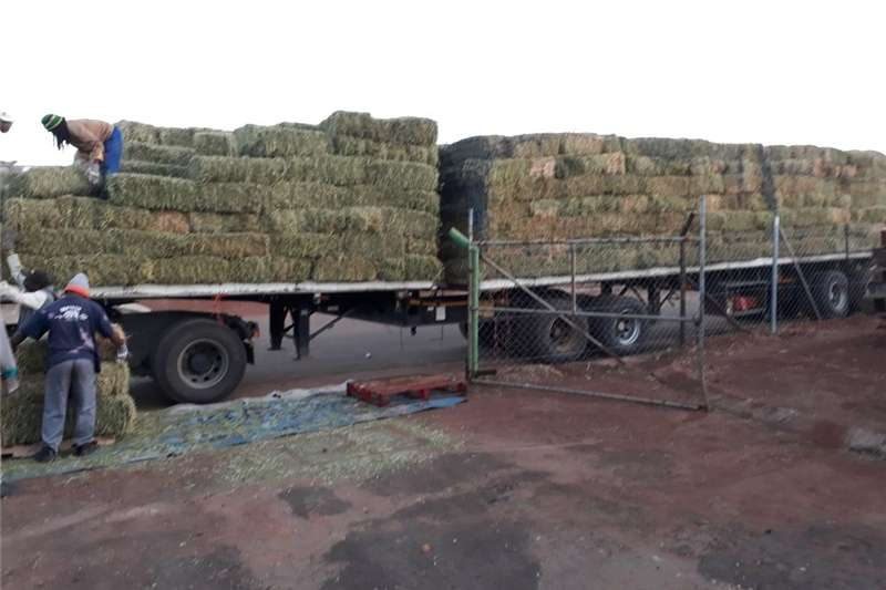 Other hay and forage Lucerne  for sale Hay and forage
