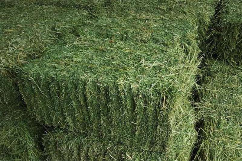 Hay and Forage Other Hay and Forage Lucerne Hay Bales Square Bales 25kg