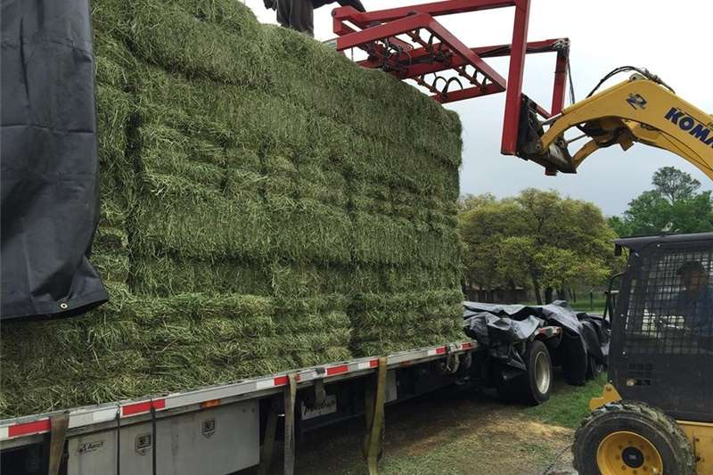 Other hay and forage Lucerne Hay Bales Square Bales 25kg Hay and forage