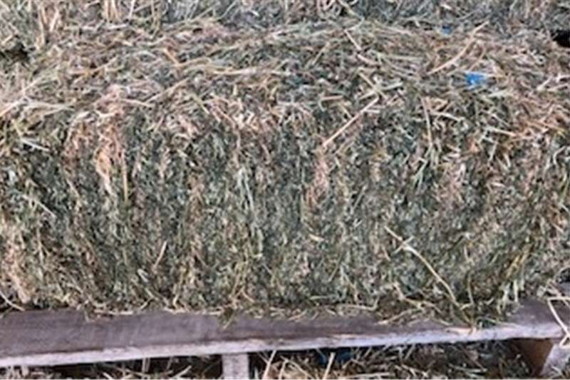 Other hay and forage Lucerne Hay Small Bales x 800 Bales Hay and forage