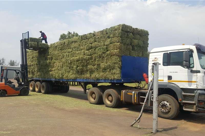 Other hay and forage Lucerne Lusern Eragrostis grass mix bales Hay and forage