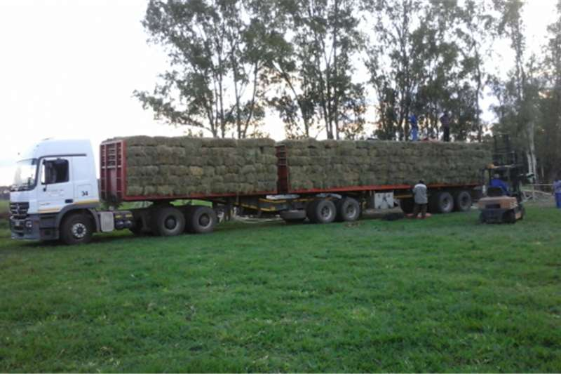 Other hay and forage Lusern and eragrostis grass bales Hay and forage