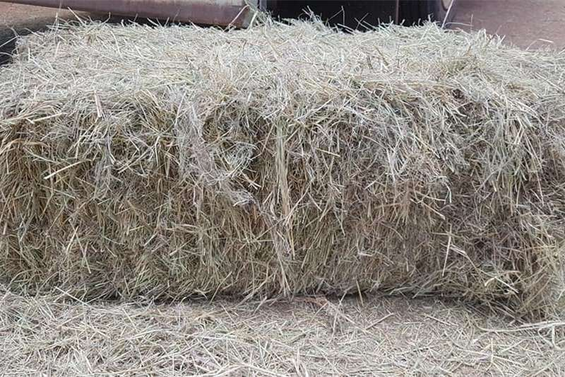 Other hay and forage Lusern and Grass Hay and forage
