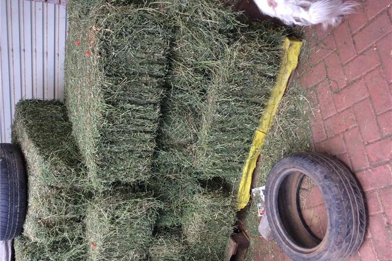 Other hay and forage Lusern bale Hay and forage