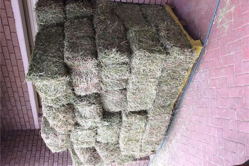 Other hay and forage Lusern Blok bale Hay and forage