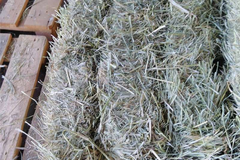 Hay and Forage Other Hay and Forage Rhodes Gras Bale
