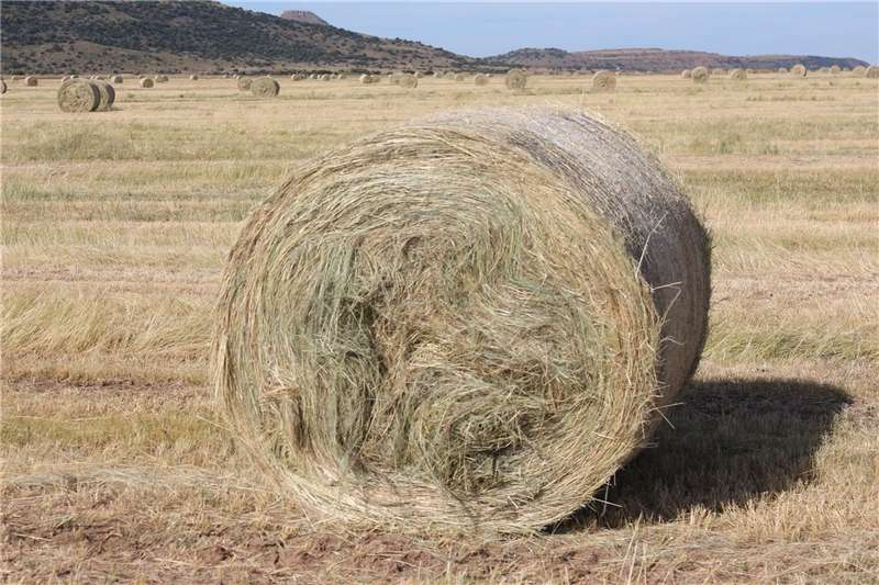 Other hay and forage Teff Bales for Sale Hay and forage