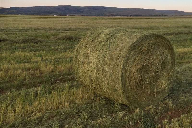 Other hay and forage Teff Bales Hay and forage