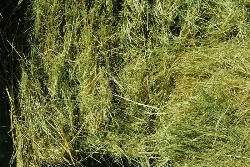 Other hay and forage Teff bales, small and large, Eragrostis, Lusern Hay and forage