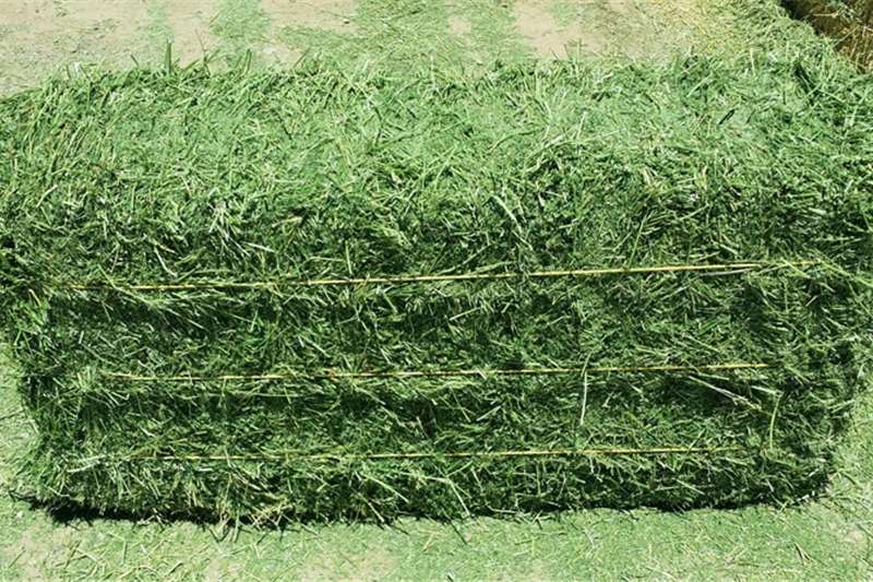 Other hay and forage Top quality bales Alfalfa hay Hay and forage