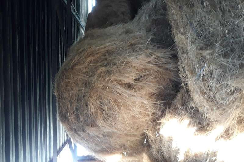 Ronde tefbale Hay and forage