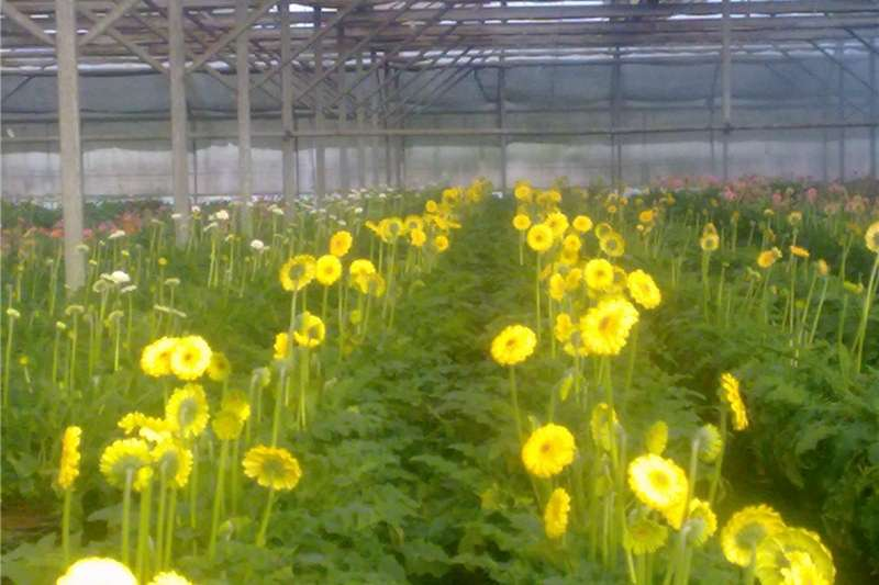 Irrigation pumps Used Greenhouse and Irrgation  Equpment for sale Irrigation