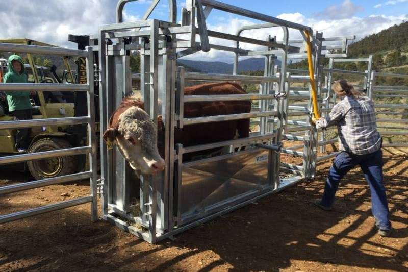 Cattle crushes complete with scales for sell Livestock
