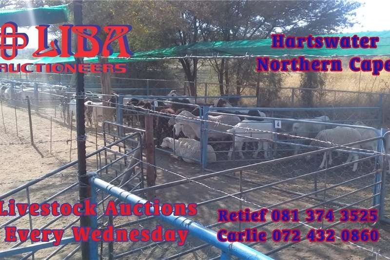 Goats 1000s of goats and sheep available this Wednesday Livestock