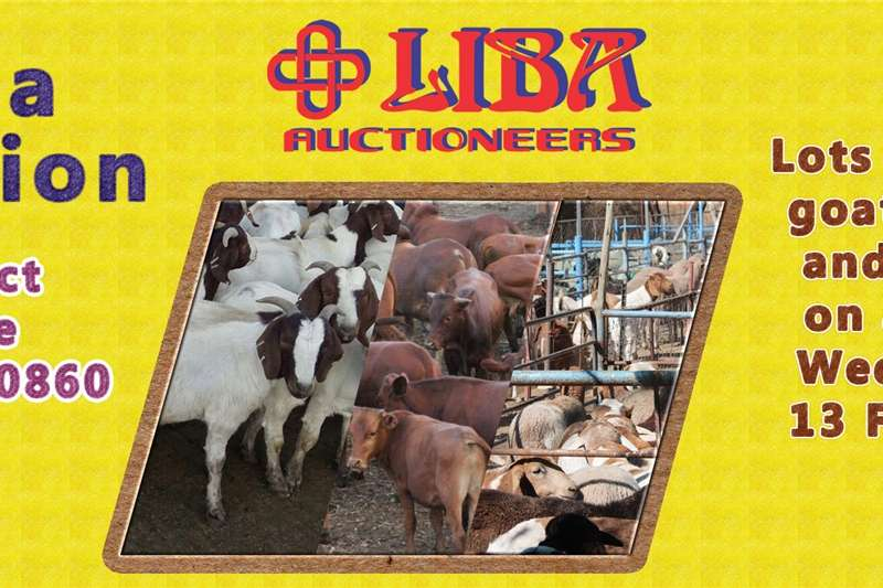 Livestock Goats Mega auction this coming Wednesday
