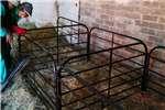 Livestock handling equipment Livestock scale equipment Lamhekkies