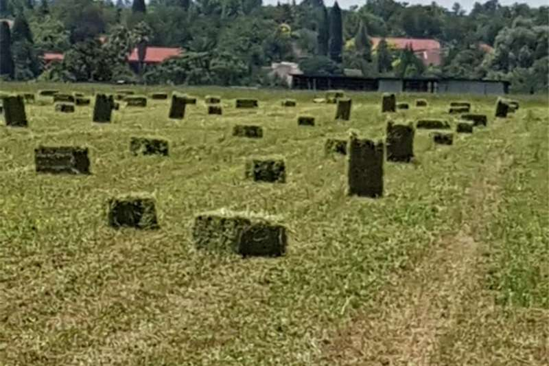 Livestock feed Lucerne bales for sale Livestock