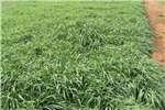 Livestock Livestock Feed Plant nou weiding vir jou diere