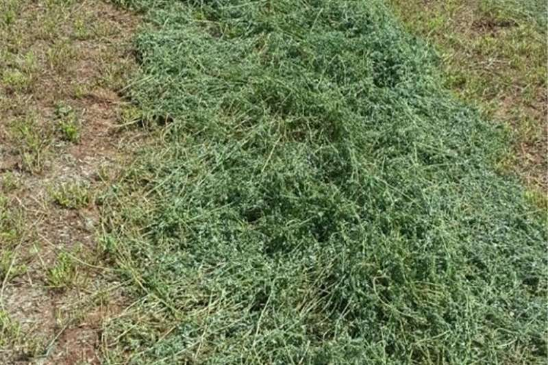 Livestock feed Top Quality A Grade Lucern dirrectly from the farm Livestock