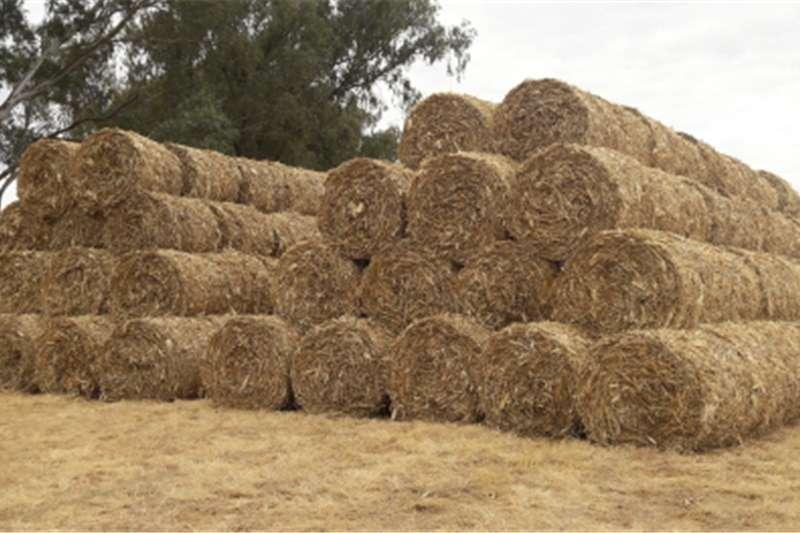 Livestock feed Voer: Mieliereste te koop Livestock