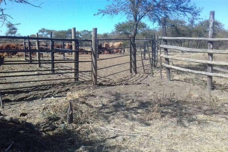 Other livestock Cattle crush panels and gates made to order Livestock