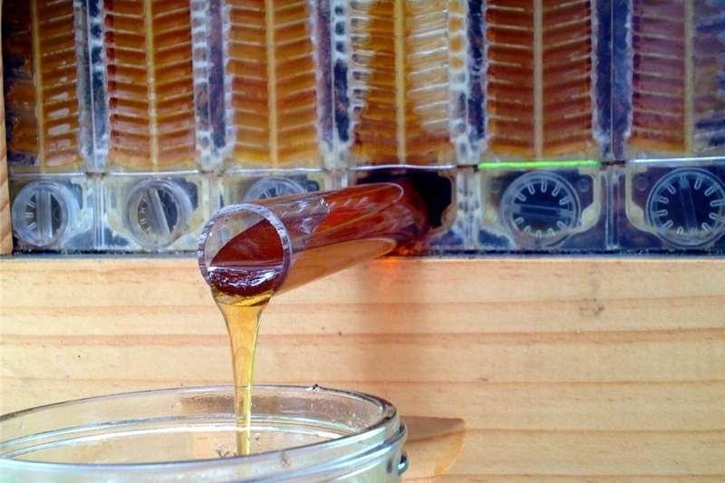 bee hive  honey flow Other