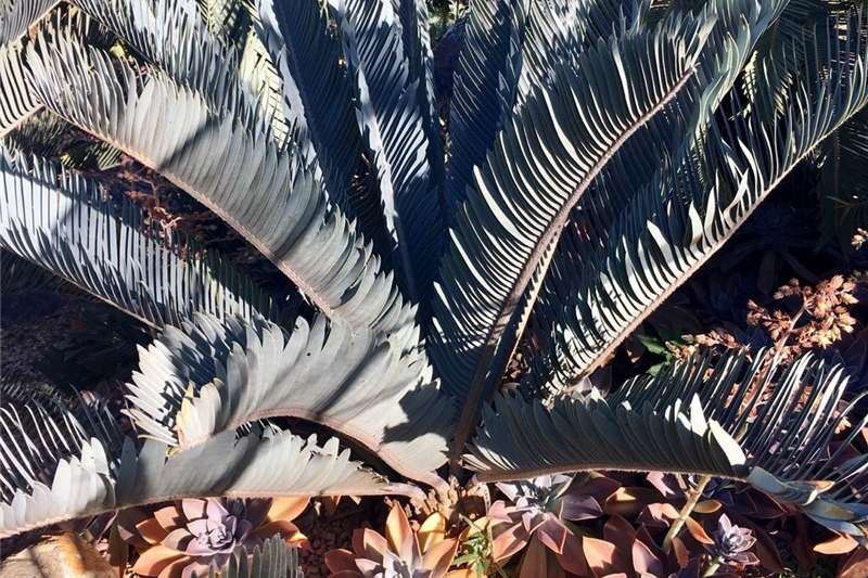Broodbome // Cycads Other