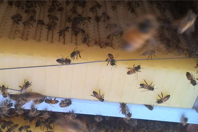 FLOW bee hive HONEY ON TAB Other