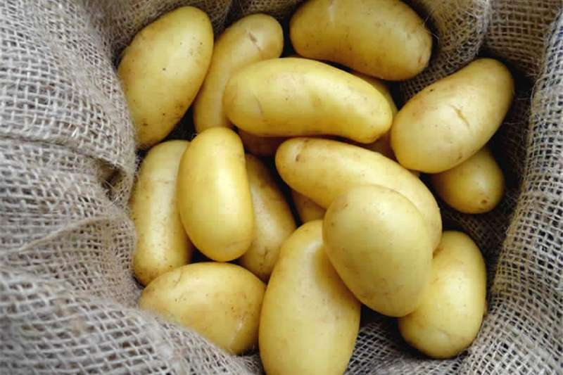 Fresh grade A potatoes for sale Other