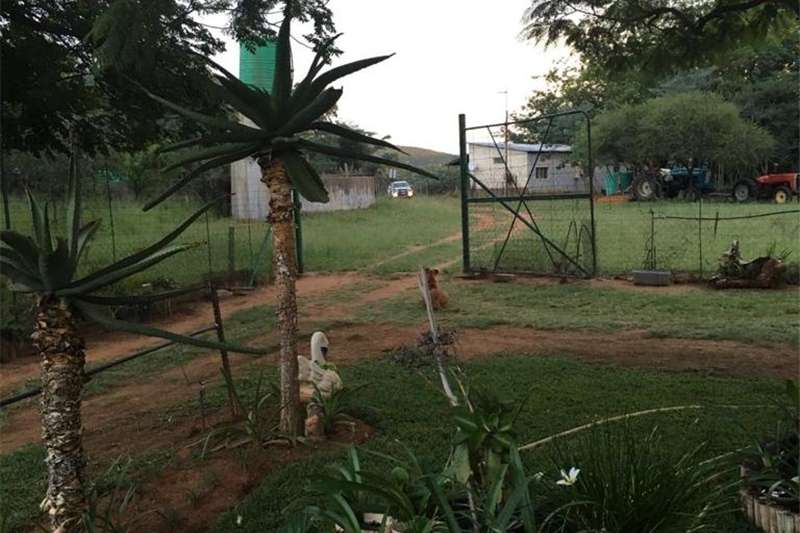 Game Farm for Sale (Limpopo) Other