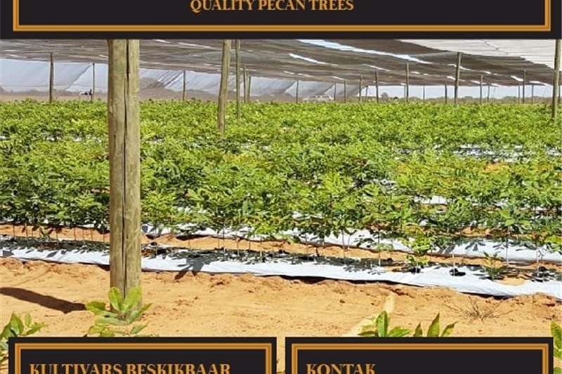 Pecan trees Other
