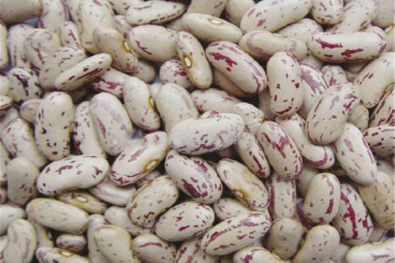 SugarBeans Other