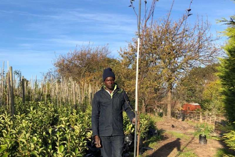 Themba Trees 20L Malus 'Crabapple'   3 meters Other