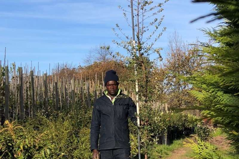 Themba Trees 20L Quercus suber   3 meters Other