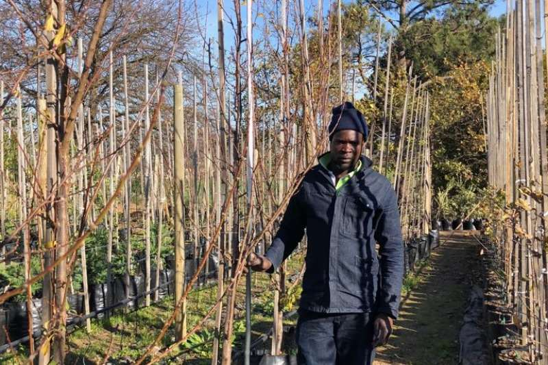Themba Trees 50L Plum   2.2 meters Other